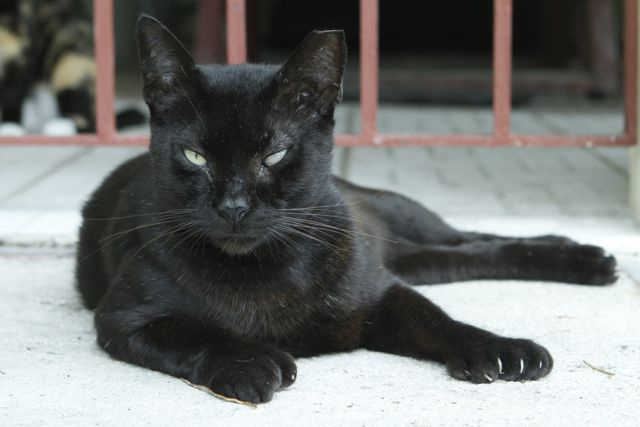 Onyx, the boss. He's got a bum eye and few battle scars. He also is the first cat I have met that is polydactyl. He has 7 toes on each front paw, so they look a bit like catcher's mitts. He's a big softy, unless you  are a strange cat invading his turf.