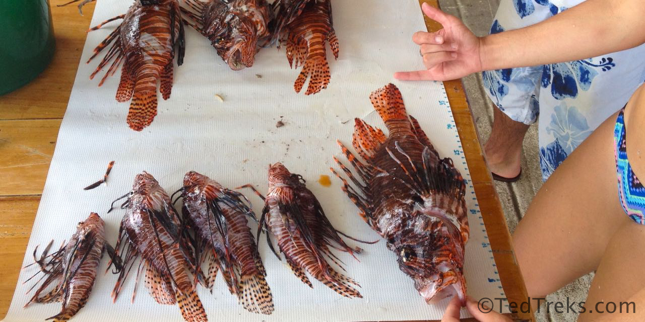 lionfishHarvestCropped2x1.wm